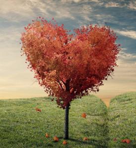 Libri d'amore da leggere: ecco i nostri romanzi consigliati