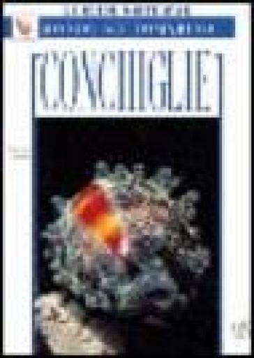 Conchiglie - Giorgio Gabbi | Jonathanterrington.com