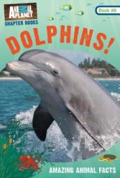 Dolphins!: Book #6