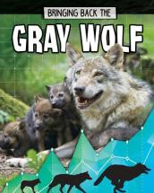 Gray Wolf - Bringing Back The - Animals Back from the Brink