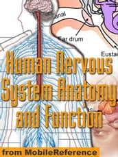 Human Nervous System Anatomy And Function Study Guide (Mobi Medical)