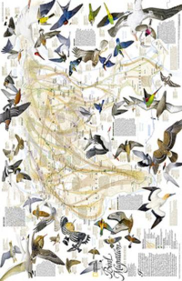 Migrazioni degli uccelli. America del Nord e del Sud. Carta murale