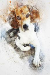Painted Beagle Dog Journal