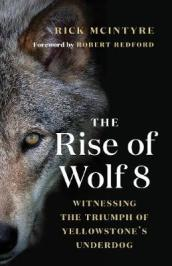 Rise of Wolf 8